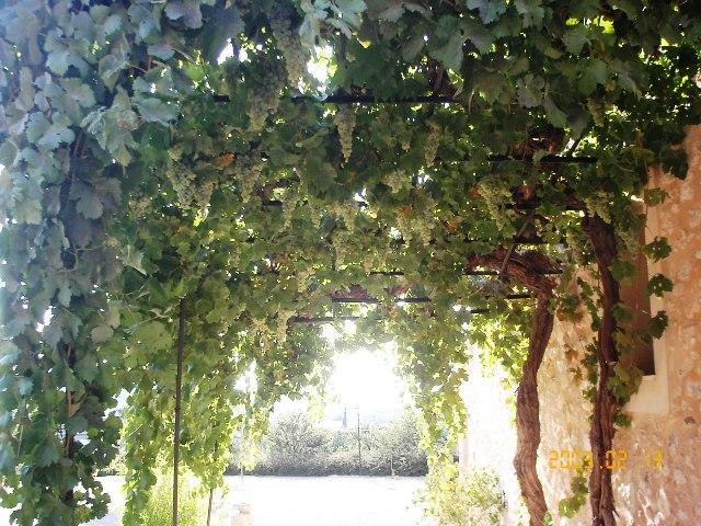 Parra con uva